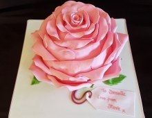Pink-Rose-bc