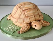 Novelty-tortoise-cake